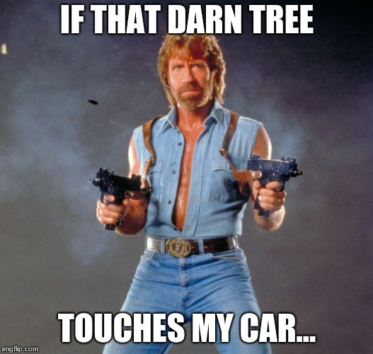 IF THAT DARN TREE TOUCHES MY CAR... | image tagged in memes,chuck norris guns,chuck norris | made w/ Imgflip meme maker