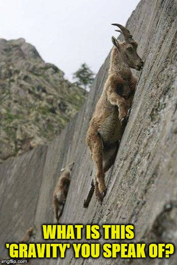 Goat climbing | WHAT IS THIS 'GRAVITY' YOU SPEAK OF? | image tagged in goat climbing | made w/ Imgflip meme maker