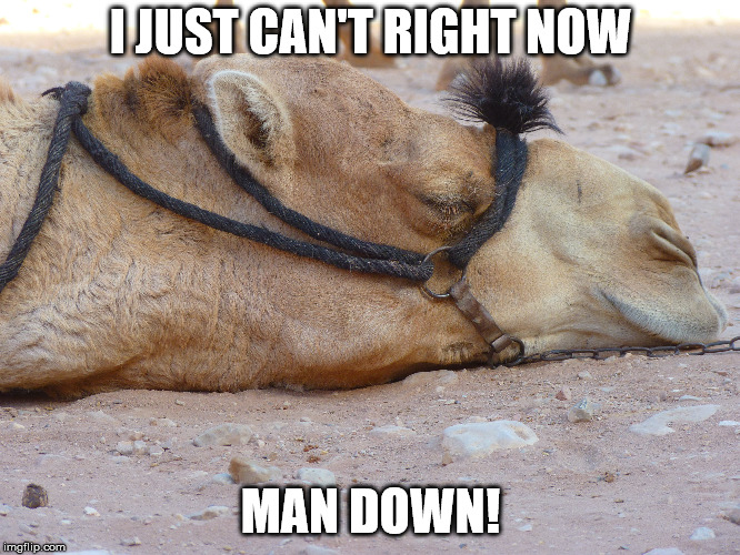 When work got to be too much... | I JUST CAN'T RIGHT NOW MAN DOWN! | image tagged in camel,so tired,exhausted,work hard,down | made w/ Imgflip meme maker