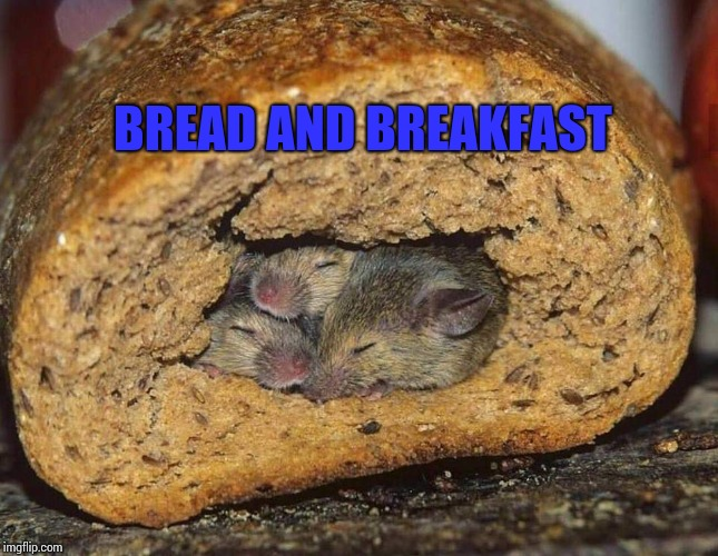 Bread and Breakfast | BREAD AND BREAKFAST | image tagged in bed n breakfast,mice,disgusting,hotel,bad puns,surprise | made w/ Imgflip meme maker