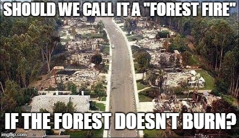 "Looks strange to me... | SHOULD WE CALL IT A ""FOREST FIRE"" IF THE FOREST DOESN'T BURN? 
