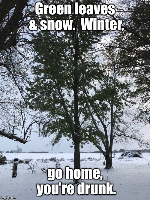 Mother Nature meets Jack Daniels | Green leaves & snow.  Winter, go home, you're drunk. | image tagged in green leaves,snow,mother nature,drunk,weather | made w/ Imgflip meme maker