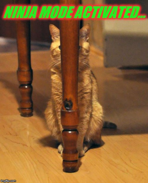He's so good at this. | NINJA MODE ACTIVATED... | image tagged in memes,cats,ninja cat,funny,stealth,hiding behind table leg | made w/ Imgflip meme maker