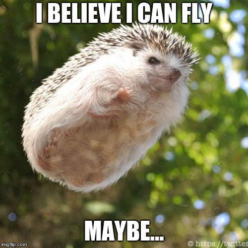 hedgehog | I BELIEVE I CAN FLY MAYBE... | image tagged in hedgehog | made w/ Imgflip meme maker