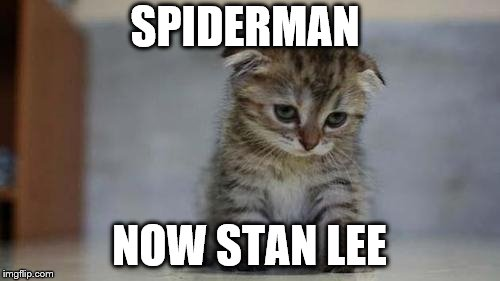 Sad kitten | SPIDERMAN NOW STAN LEE | image tagged in sad kitten | made w/ Imgflip meme maker
