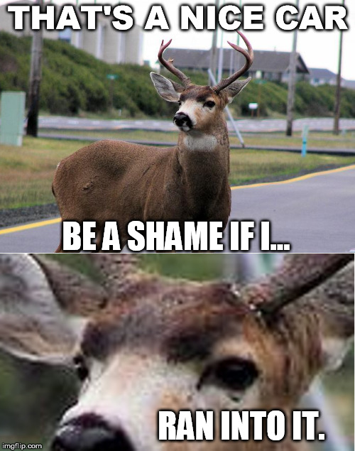 Nice Car | THAT'S A NICE CAR BE A SHAME IF I... RAN INTO IT. | image tagged in deer,wreck,car | made w/ Imgflip meme maker