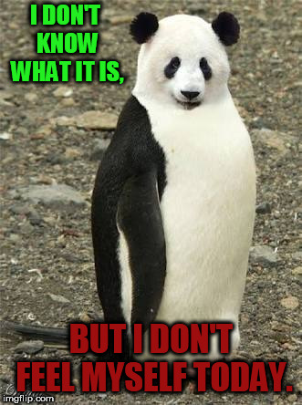 I DON'T KNOW WHAT IT IS, BUT I DON'T FEEL MYSELF TODAY. | image tagged in crazy animals-emperor panda | made w/ Imgflip meme maker