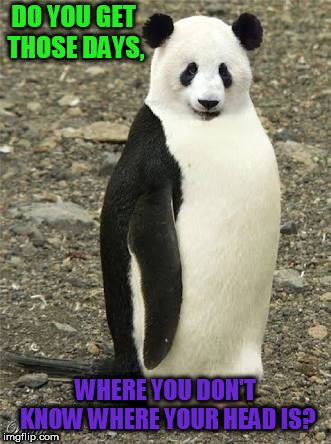 DO YOU GET THOSE DAYS, WHERE YOU DON'T KNOW WHERE YOUR HEAD IS? | image tagged in crazy animals-emperor panda | made w/ Imgflip meme maker