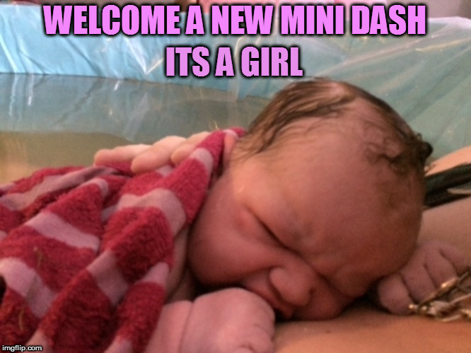 A Newer Mini Dash. Born 1:54 pm and a whopping 9lbs 12 ounces!   | WELCOME A NEW MINI DASH ITS A GIRL | image tagged in memes,mini dash,its a girl,november 13th,baby,home birth | made w/ Imgflip meme maker