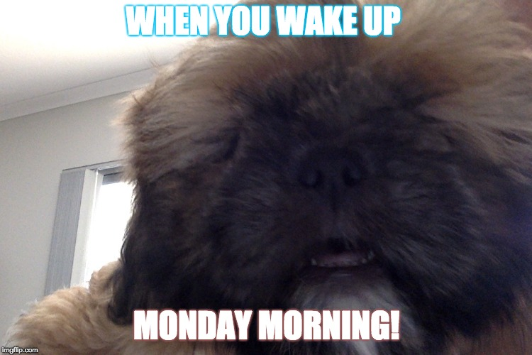 Monday Mornings |  WHEN YOU WAKE UP; MONDAY MORNING! | image tagged in monday mornings | made w/ Imgflip meme maker