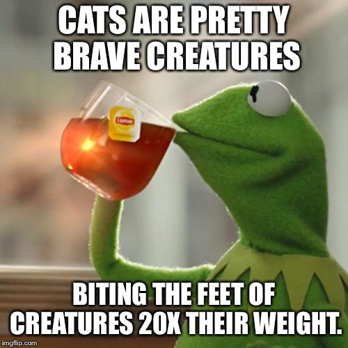 They don't even back down to bears | CATS ARE PRETTY BRAVE CREATURES BITING THE FEET OF CREATURES 20X THEIR WEIGHT. | image tagged in memes,but thats none of my business,kermit the frog | made w/ Imgflip meme maker