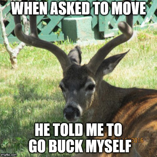 WHEN ASKED TO MOVE HE TOLD ME TO GO BUCK MYSELF | image tagged in see nobody cares,its not going to happen,move on,oh hell no | made w/ Imgflip meme maker