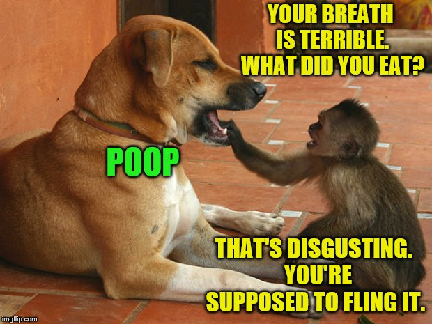 YOUR BREATH IS TERRIBLE. WHAT DID YOU EAT? THAT'S DISGUSTING.  YOU'RE SUPPOSED TO FLING IT. POOP | image tagged in memes,dogs,monkeys,poop,funny,bad breath | made w/ Imgflip meme maker