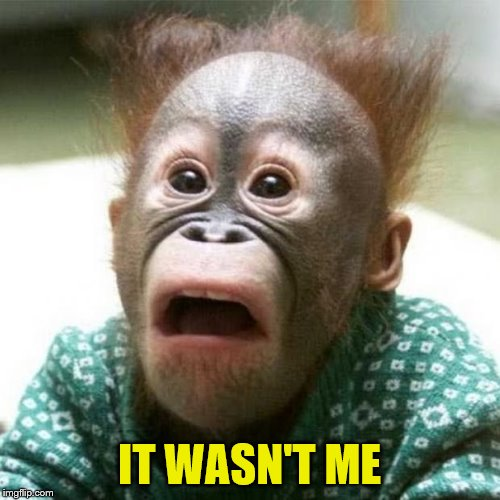 Shocked Monkey | IT WASN'T ME | image tagged in shocked monkey | made w/ Imgflip meme maker