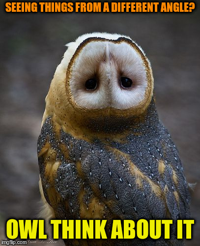 Fowl mood? | SEEING THINGS FROM A DIFFERENT ANGLE? OWL THINK ABOUT IT | image tagged in memes,owls | made w/ Imgflip meme maker