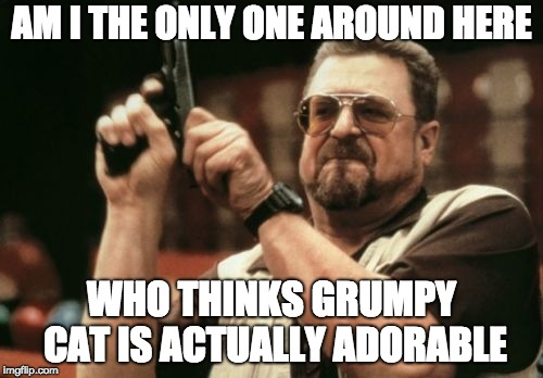 Am I The Only One Around Here Meme | AM I THE ONLY ONE AROUND HERE WHO THINKS GRUMPY CAT IS ACTUALLY ADORABLE | image tagged in memes,am i the only one around here | made w/ Imgflip meme maker
