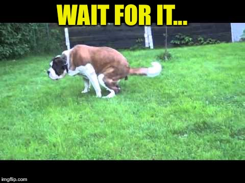 Dog shit | WAIT FOR IT... | image tagged in dog shit | made w/ Imgflip meme maker