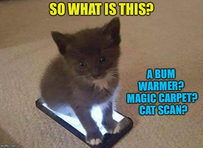 Kitten must know! | SO WHAT IS THIS? A BUM WARMER?  MAGIC CARPET?  CAT SCAN? | image tagged in cute cat,cats,memes,funny | made w/ Imgflip meme maker