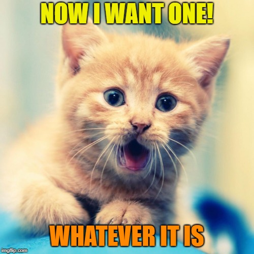 NOW I WANT ONE! WHATEVER IT IS | made w/ Imgflip meme maker