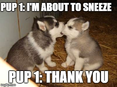 Cute Puppies | PUP 1: I'M ABOUT TO SNEEZE PUP 1: THANK YOU | image tagged in memes,cute puppies | made w/ Imgflip meme maker