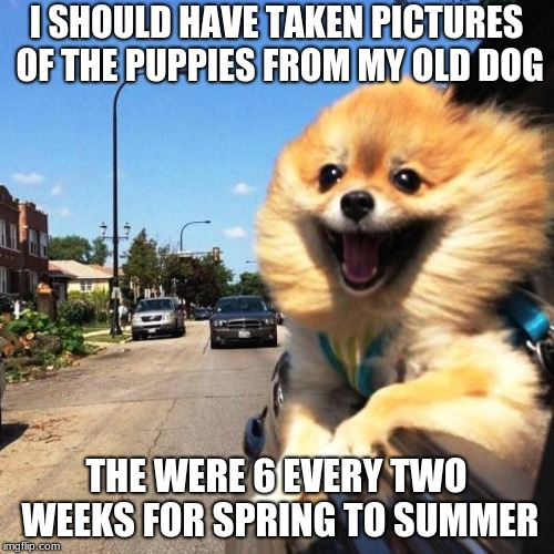 happy dog | I SHOULD HAVE TAKEN PICTURES OF THE PUPPIES FROM MY OLD DOG THE WERE 6 EVERY TWO WEEKS FOR SPRING TO SUMMER | image tagged in happy dog | made w/ Imgflip meme maker