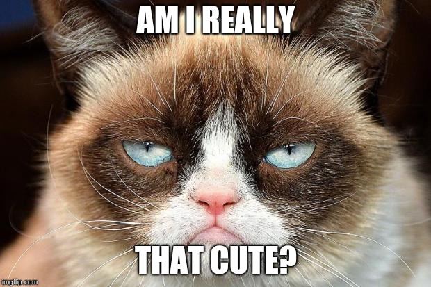 Grumpy Cat Not Amused Meme | AM I REALLY THAT CUTE? | image tagged in memes,grumpy cat not amused,grumpy cat | made w/ Imgflip meme maker