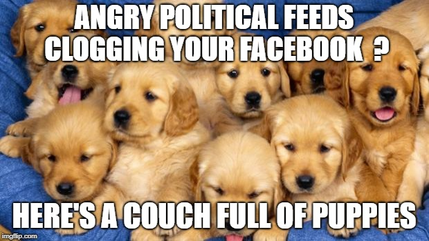 puppies | ANGRY POLITICAL FEEDS CLOGGING YOUR FACEBOOK  ? HERE'S A COUCH FULL OF PUPPIES | image tagged in puppies | made w/ Imgflip meme maker