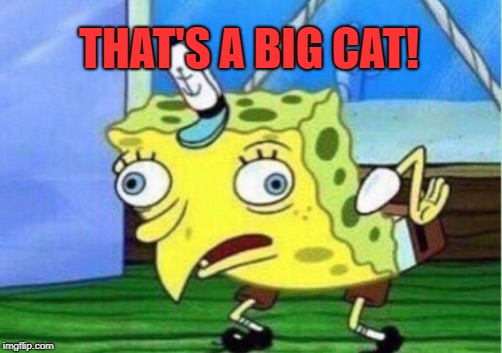 Mocking Spongebob Meme | THAT'S A BIG CAT! | image tagged in memes,mocking spongebob | made w/ Imgflip meme maker