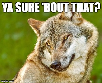 ya sure? | YA SURE 'BOUT THAT? | image tagged in sure,wolf,cute | made w/ Imgflip meme maker