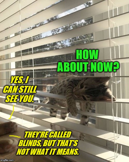 Kitty blinds | HOW ABOUT NOW? THEY'RE CALLED BLINDS, BUT THAT'S NOT WHAT IT MEANS. YES, I CAN STILL SEE YOU. | image tagged in memes,cats,blinds,kitten,funny | made w/ Imgflip meme maker