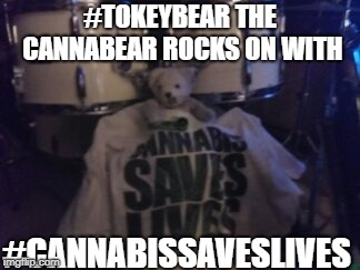 #TOKEYBEAR THE CANNABEAR ROCKS ON WITH #CANNABISSAVESLIVES | image tagged in tokey bear cannabis saves lives drum solo safety meeting break | made w/ Imgflip meme maker