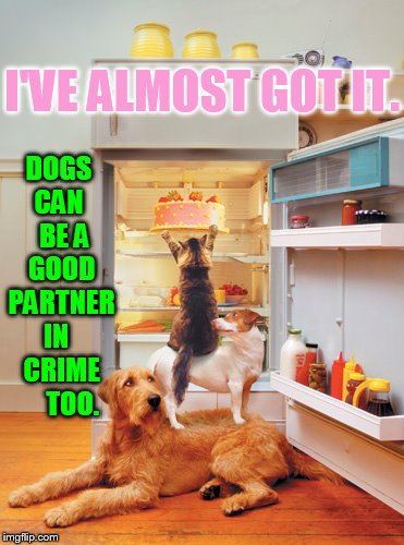 I'VE ALMOST GOT IT. DOGS CAN   BE A GOOD PARTNER IN   CRIME     TOO. | made w/ Imgflip meme maker