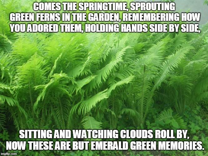 Emerald Green Memories | COMES THE SPRINGTIME, SPROUTING GREEN FERNS IN THE GARDEN, REMEMBERING HOW YOU ADORED THEM, HOLDING HANDS SIDE BY SIDE, SITTING AND WATCHING | image tagged in spring,memories,gardens,ferms | made w/ Imgflip meme maker