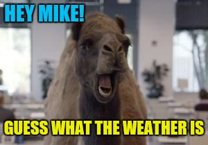 Hump Day Camel | HEY MIKE! GUESS WHAT THE WEATHER IS | image tagged in hump day camel | made w/ Imgflip meme maker