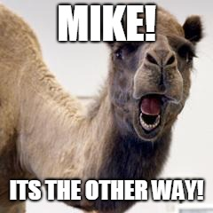 Camel | MIKE! ITS THE OTHER WAY! | image tagged in camel | made w/ Imgflip meme maker