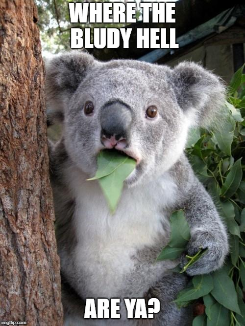 Surprised Koala Meme | WHERE THE BLUDY HELL ARE YA? | image tagged in memes,surprised koala | made w/ Imgflip meme maker