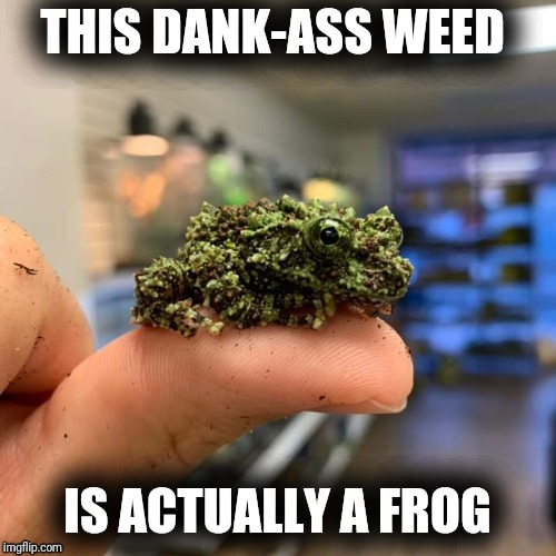 Vietnamese Weed Frog | THIS DANK-ASS WEED IS ACTUALLY A FROG | image tagged in vietnamese weed frog | made w/ Imgflip meme maker