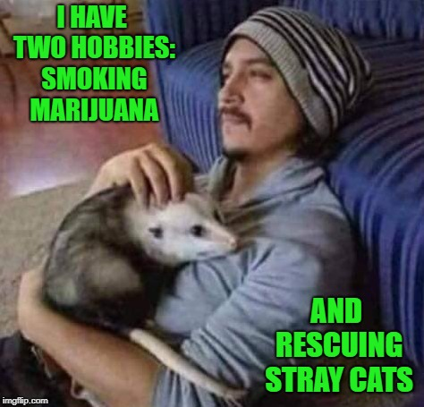 Be good to the animals!!! | I HAVE TWO HOBBIES: SMOKING MARIJUANA AND RESCUING STRAY CATS | image tagged in man with possum,memes,stray cats,funny,marijuana,hobbies | made w/ Imgflip meme maker