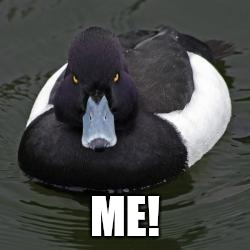 Angry Advice Mallard | ME! | image tagged in angry advice mallard | made w/ Imgflip meme maker