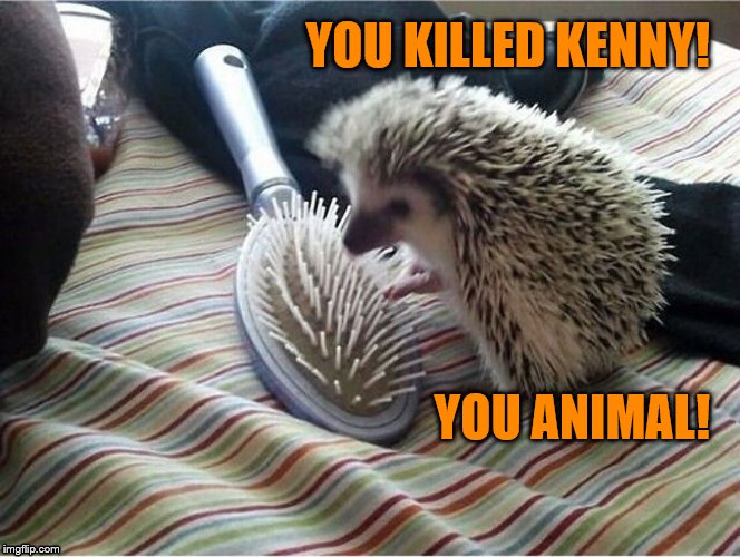 But at least a woman's hair will be free of tangles | YOU KILLED KENNY! YOU ANIMAL! | image tagged in memes,hedgehog,hairbrush,porcupine,dashhopes,funny | made w/ Imgflip meme maker