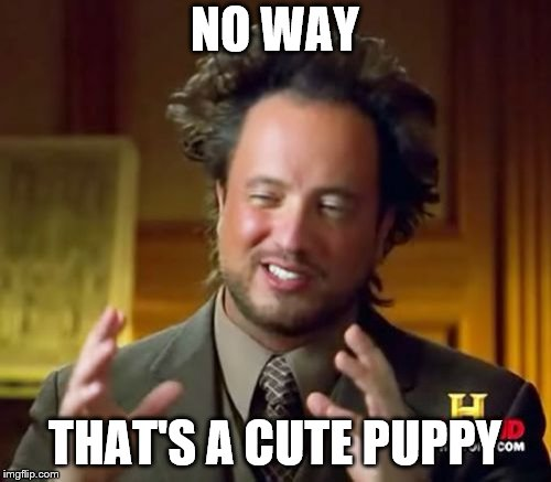 Ancient Aliens Meme | NO WAY THAT'S A CUTE PUPPY | image tagged in memes,ancient aliens | made w/ Imgflip meme maker