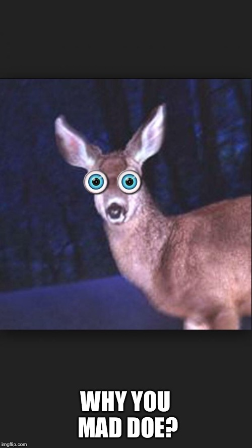 deer in headlights | WHY YOU MAD DOE? | image tagged in deer in headlights | made w/ Imgflip meme maker