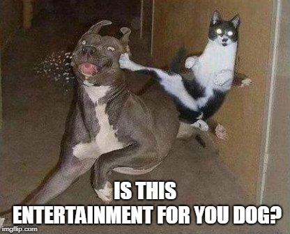 Cat Kicking Dog | IS THIS ENTERTAINMENT FOR YOU DOG? | image tagged in cat kicking dog | made w/ Imgflip meme maker