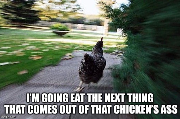 Chicken Running | I'M GOING EAT THE NEXT THING THAT COMES OUT OF THAT CHICKEN'S ASS | image tagged in chicken running | made w/ Imgflip meme maker