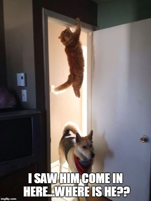 SKILLZ | I SAW HIM COME IN HERE...WHERE IS HE?? | image tagged in cat,dog | made w/ Imgflip meme maker