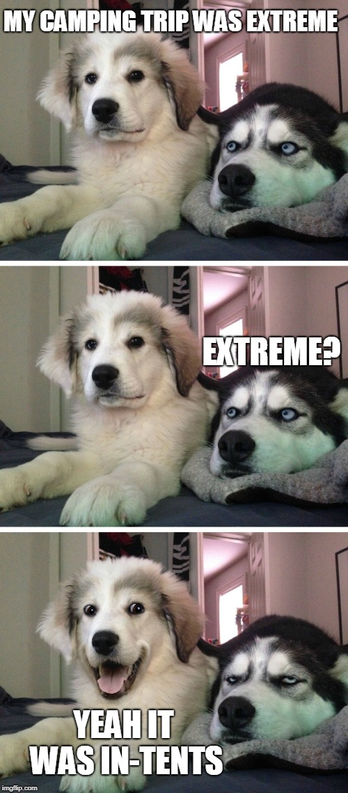 Bad pun dogs | MY CAMPING TRIP WAS EXTREME YEAH IT WAS IN-TENTS EXTREME? | image tagged in bad pun dogs | made w/ Imgflip meme maker