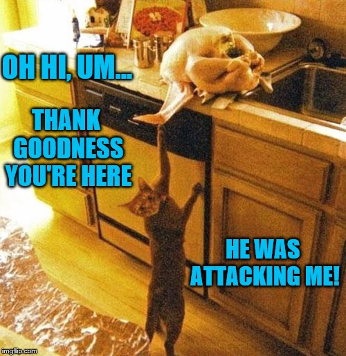 I'm so glad the cat is safe now. | OH HI, UM... HE WAS ATTACKING ME! THANK GOODNESS YOU'RE HERE | image tagged in cat snags turkey on counter,memes,caught in the act,cats,funny,thanksgiving | made w/ Imgflip meme maker