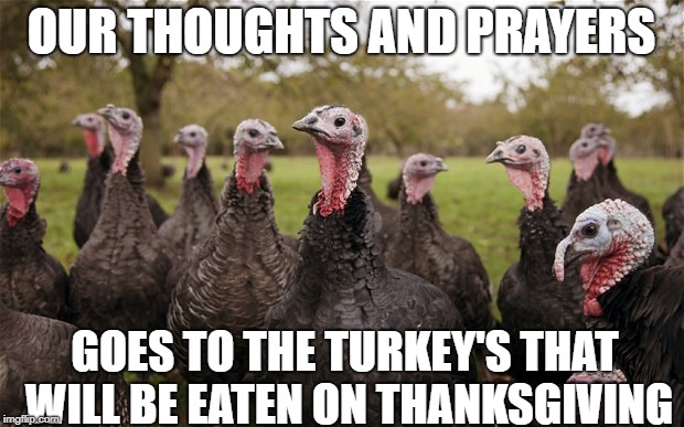 Turkeys | OUR THOUGHTS AND PRAYERS GOES TO THE TURKEY'S THAT WILL BE EATEN ON THANKSGIVING | image tagged in turkeys | made w/ Imgflip meme maker