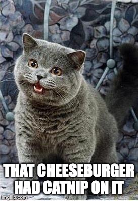 I can has cheezburger cat |  THAT CHEESEBURGER HAD CATNIP ON IT | image tagged in i can has cheezburger cat | made w/ Imgflip meme maker
