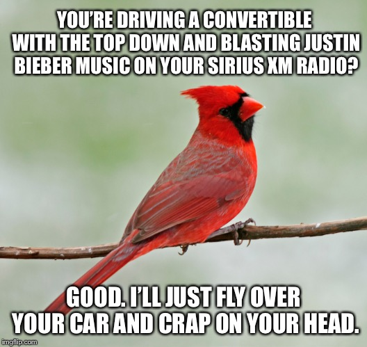 Another crappy tune by Justin Bieber | YOU'RE DRIVING A CONVERTIBLE WITH THE TOP DOWN AND BLASTING JUSTIN BIEBER MUSIC ON YOUR SIRIUS XM RADIO? GOOD. I'LL JUST FLY OVER YOUR CAR A | image tagged in critical cardinal,memes,justin bieber,convertible,angry birds,crap | made w/ Imgflip meme maker